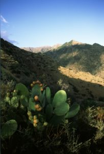 Foto di cactus sull'Aspromonte