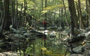 Foto di fiume con rocce e alberi