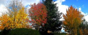 Foto dell'Aspromonte in autunno